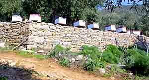 Beehives along the track